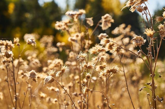 suché květiny
