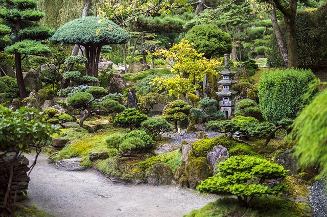 stromy v japonské zahradě